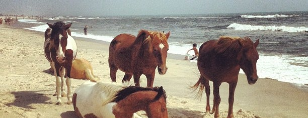 Assateague Island National Seashore (Maryland) is one of Stevenson Favorite US Beaches.