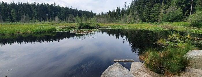 Beaver Lake is one of Sashaさんのお気に入りスポット.