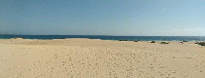 Dunas De Corralejo is one of สถานที่ที่ Sindicalsitas de Canarias SSCC ถูกใจ.