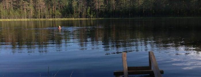 Лесное Озеро Лейпясуо is one of Аннаさんのお気に入りスポット.