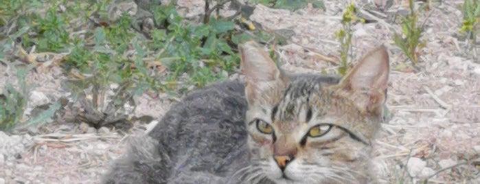 Köfteci Yusuf is one of Lieux qui ont plu à Altuğ.
