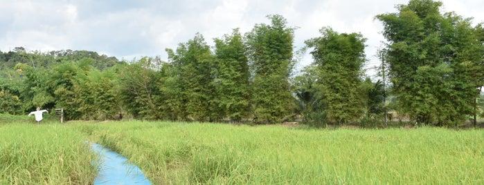 ภูกะเหรี่ยง is one of Nakon nayok.