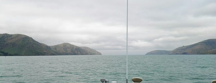 Black Cat Cruises, Akaroa is one of Locais curtidos por Alan.
