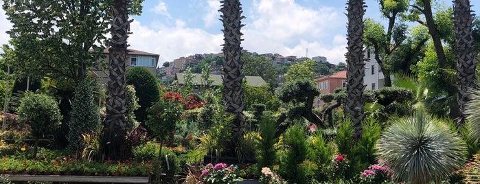 Palmiye Botanik is one of İstanbul.
