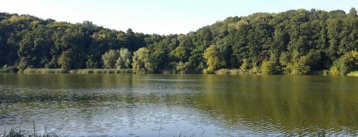 Голосіївський ліс is one of Beauty.