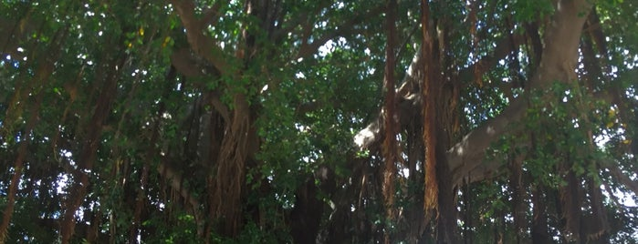 Wailuku Banyan Tree Park is one of Maui 2019.