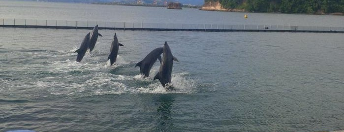 Ocean Adventure is one of Must Visit in Olongapo City - #visitUS.