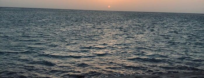 Seagull Island is one of Yanbu.