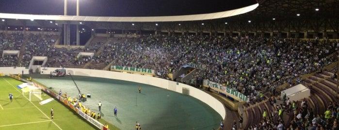 Estádio Doutor Adhemar Pereira de Barros (Arena da Fonte) is one of สถานที่ที่ Alceu ถูกใจ.