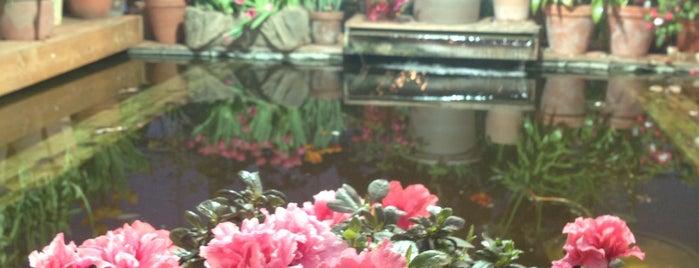 The Apothecaries' Garden is one of Locais curtidos por Natalya.