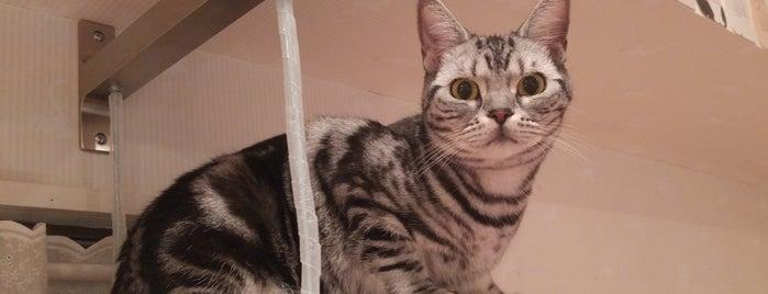 ハピ猫 is one of Karissaさんの保存済みスポット.