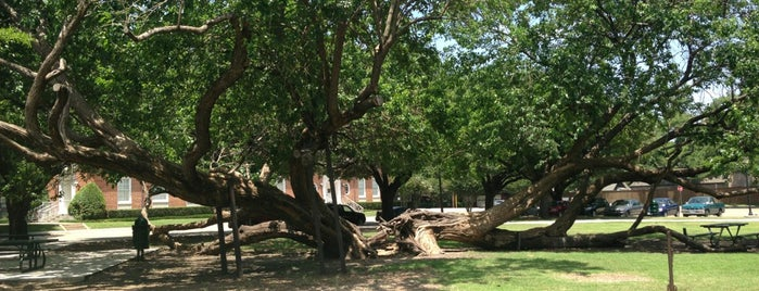 Tietze Park is one of Must-visit Great Outdoors in Dallas.