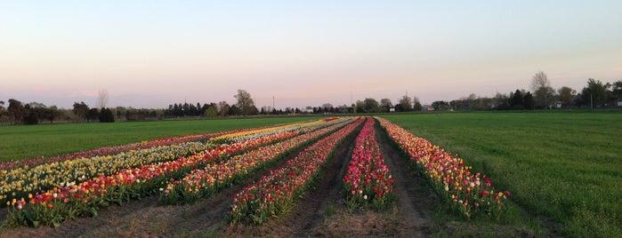 Veldheer Tulip Gardens & De Klomp Wooden Shoe Factory is one of Michigan.