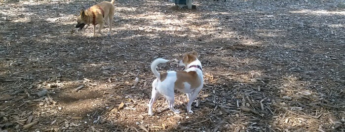 North Shore Dog Park is one of places to try.
