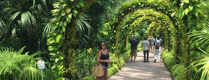 九里香@ Botanical Gardens is one of Places I luv.
