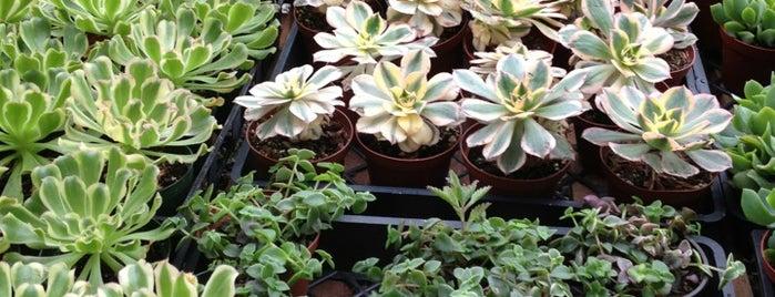 OC Succulents is one of Lieux qui ont plu à Ailie.