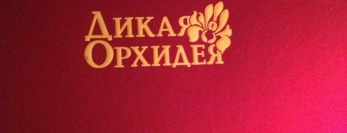 Дикая Орхидея is one of +381642216944#.
