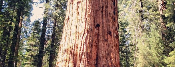 Sequoia National Park is one of Tulare-Visalia Highlights.