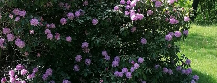 Rhododendronpark Kromlau is one of Yi: сохраненные места.