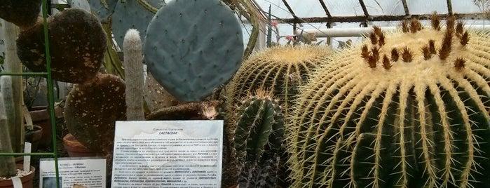 Ботаническа градина на БАН is one of สถานที่ที่ 83 ถูกใจ.