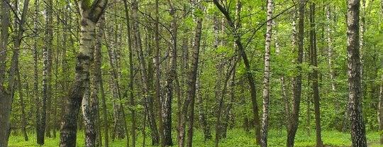 Химкинский лес is one of Living in Khimki.