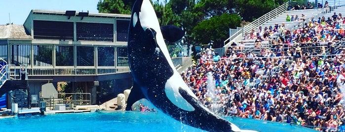 SeaWorld San Diego is one of สถานที่ที่ Laetitia ถูกใจ.
