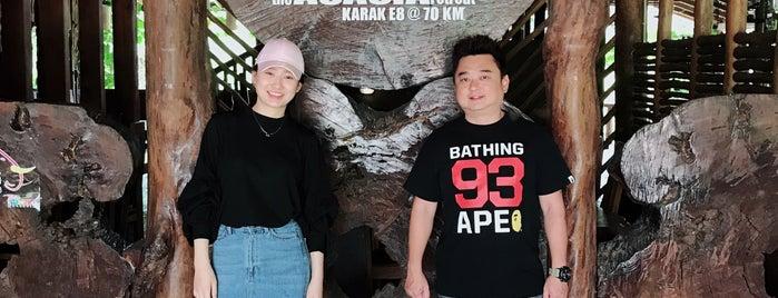 The ACACIA Retreat is one of Neu Tea's Bentong & Raub Trip.