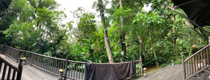 Capella Ubud, Bali is one of Bali.