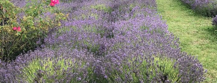 fragrant isle lavender farm is one of Green Bay.