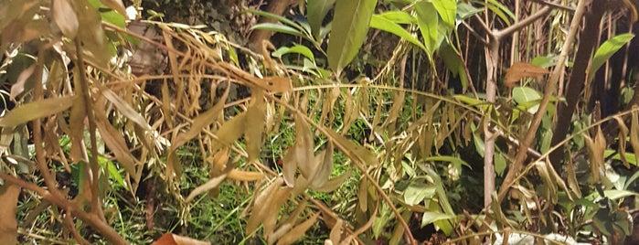 Le Jardin d'Ivy is one of Mouffetard et alentours.