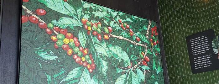 Starbucks is one of Tempat yang Disukai Ferhat.