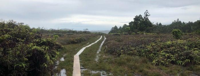 Alakai Swamp is one of Hawaii: Kauai.