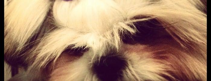 Pet DogStore is one of Orte, die Cris gefallen.