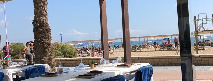 """Delfin Restaurante is one of """"Must go""""."""