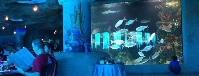Aquarium Restaurant Is One Of Top 11 Seafood Restaurants In Houston Bay Area