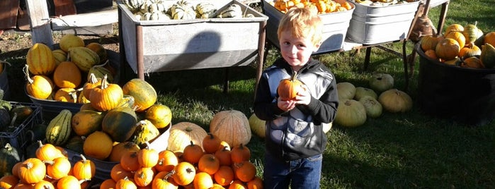 Sweet Pickin's Pumpkin Patch is one of Orte, die Rachel gefallen.
