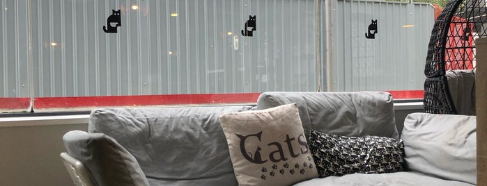 Cat Café is one of Manchester.