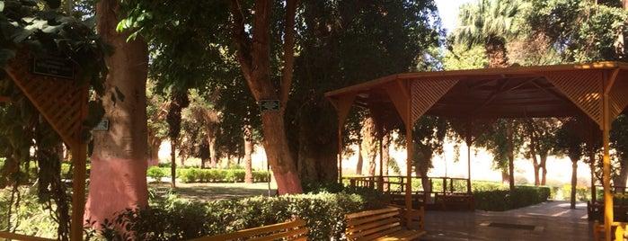 Aswan Botanical Island is one of Emilio 님이 좋아한 장소.