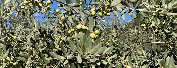 Ojai Olive Oil Company is one of Lieux qui ont plu à Jason.