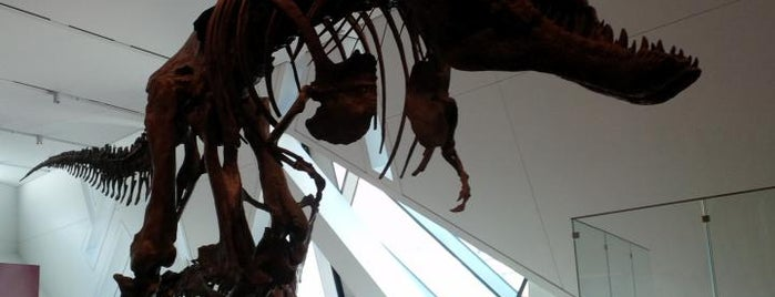 Museo Real de Ontario is one of Best places to see dinosaurs.