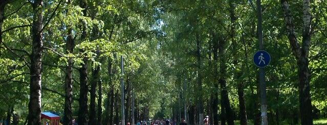 Берёзовая аллея is one of The Long Walk.