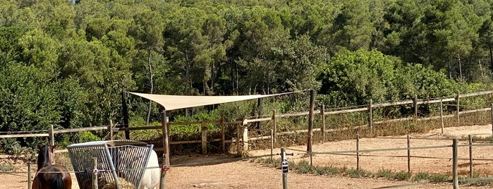 Gramona Farm is one of Penedes.