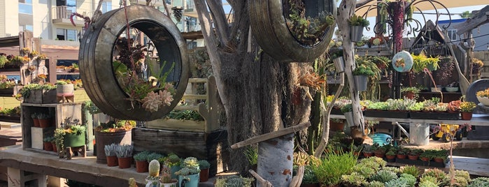 Succulent Cafe is one of San Diego.