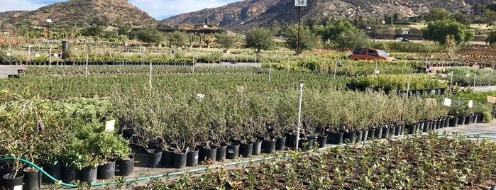 Evergreen Nursery is one of California.