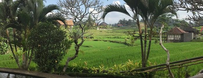 Karsa Kafe is one of Bali.