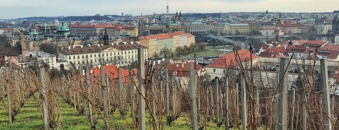 Svatováclavská vinice is one of Prag.