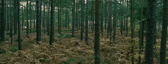 Bourne Wood is one of Children of Men (2006).