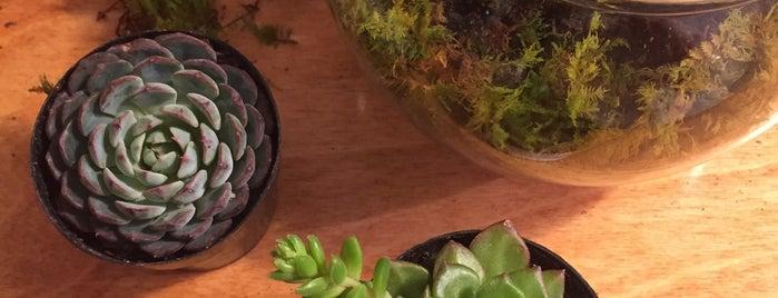 The Lemon Bowl is one of kazahel 님이 좋아한 장소.