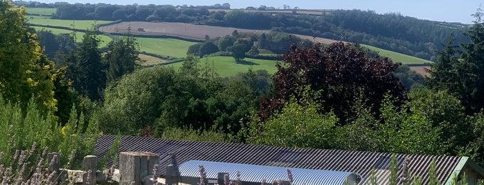 Duchy of Cornwall Nursery is one of Cornwall.