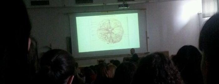 Facultatea de Psihologie şi Ştiinţe ale Educaţiei is one of Lugares guardados de Bianca.